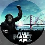 Rise Disc