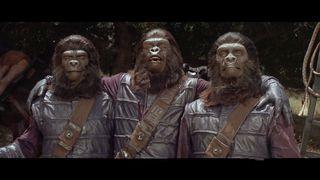 POTA gorillas